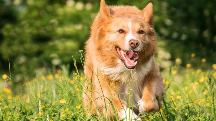 Wirtualny opiekun dla zwierzaka