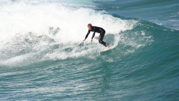 Sekwoje, surferzy i łosie